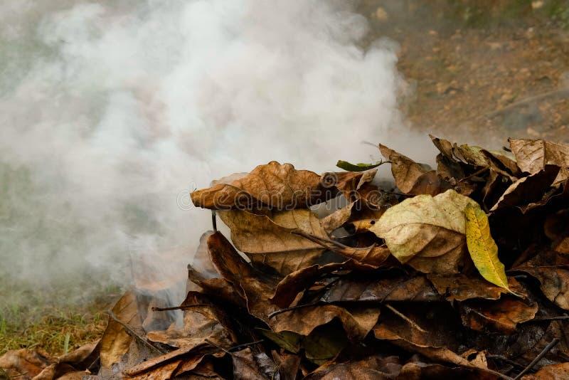 Сухие листья горя в лесе, производящ золу и дым стоковое изображение