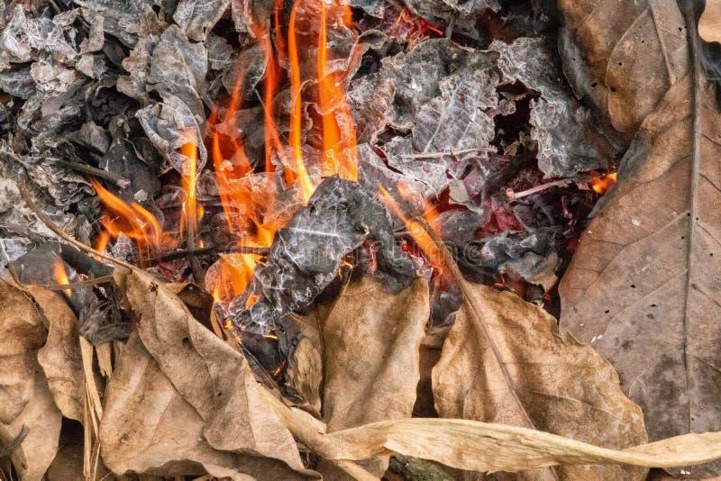 Сухие листья горя производящ золу и дым стоковое фото