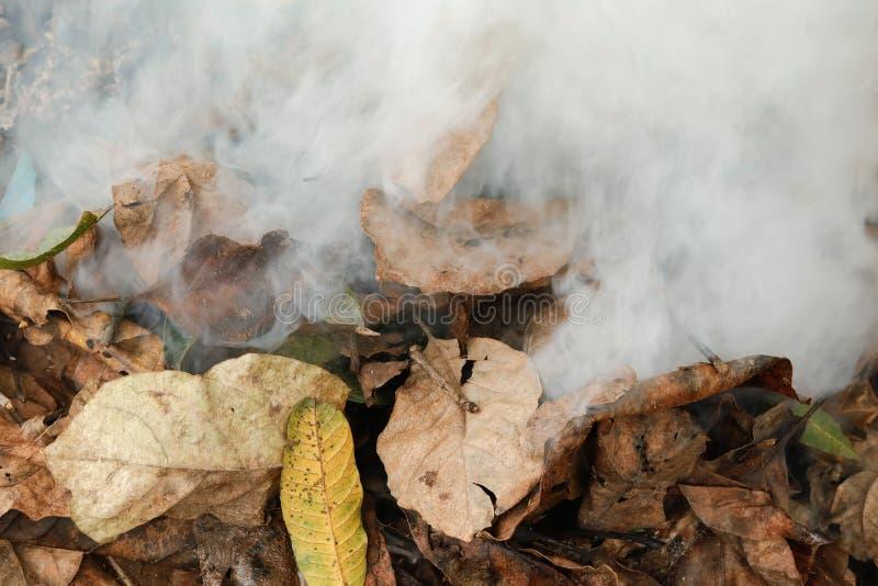 Сухие листья горя производящ золу и дым стоковое изображение