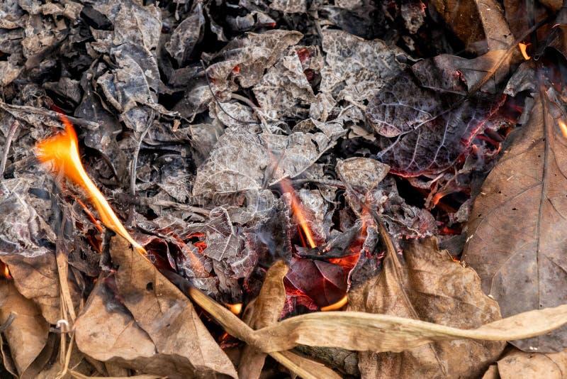 Сухие листья горя производящ золу и дым стоковое изображение rf
