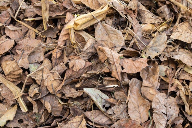 Сухие листья деревьев лежа в поле стоковые фотографии rf