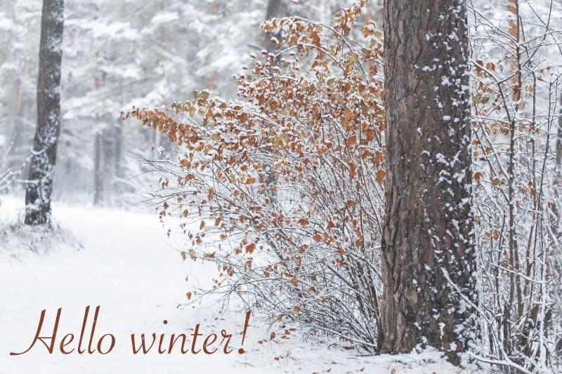 Сухие листья на кусте в лесе зимы с падая снегом и зимой nello надписи стоковые изображения
