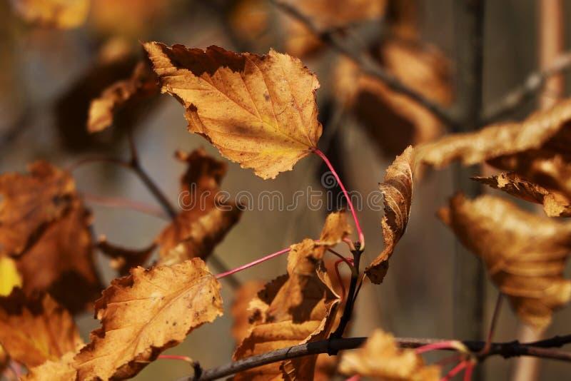 Сухие листья осени в солнце стоковые фотографии rf