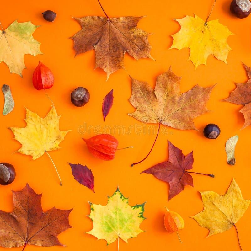 Сухие листья осени как шаблон рамки стоковые изображения