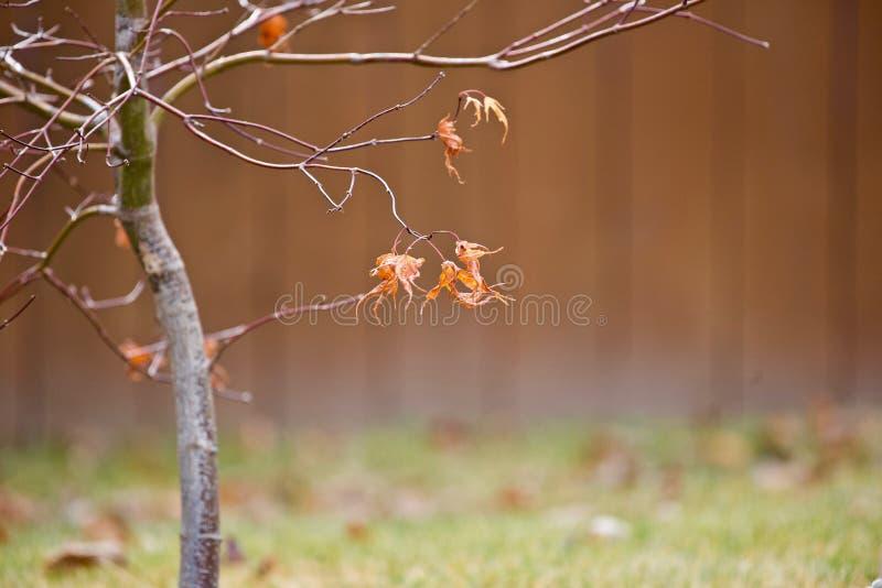 Сухие листья осени на ветвях стоковое изображение