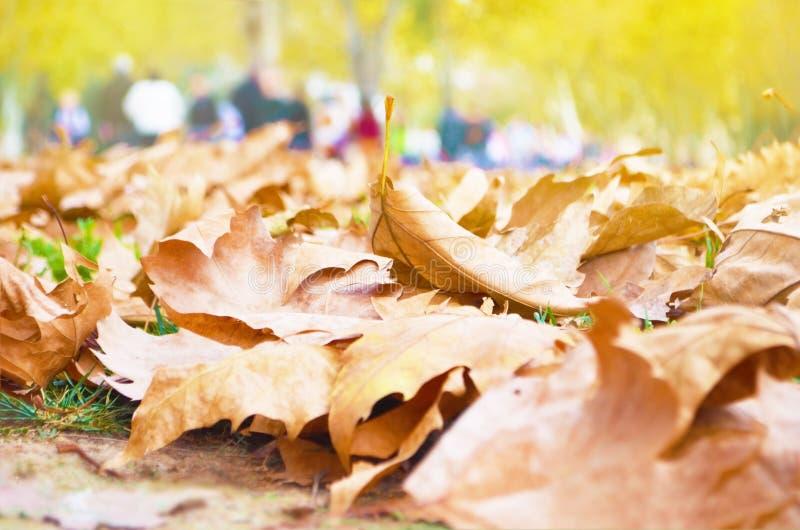 Сухие листья осени на том основании стоковое фото rf