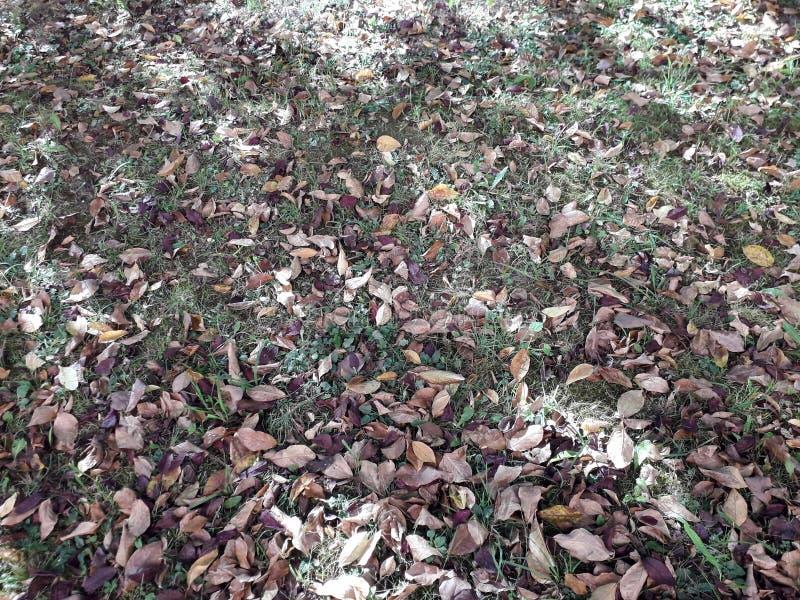 Сухие листья, осень стоковое изображение