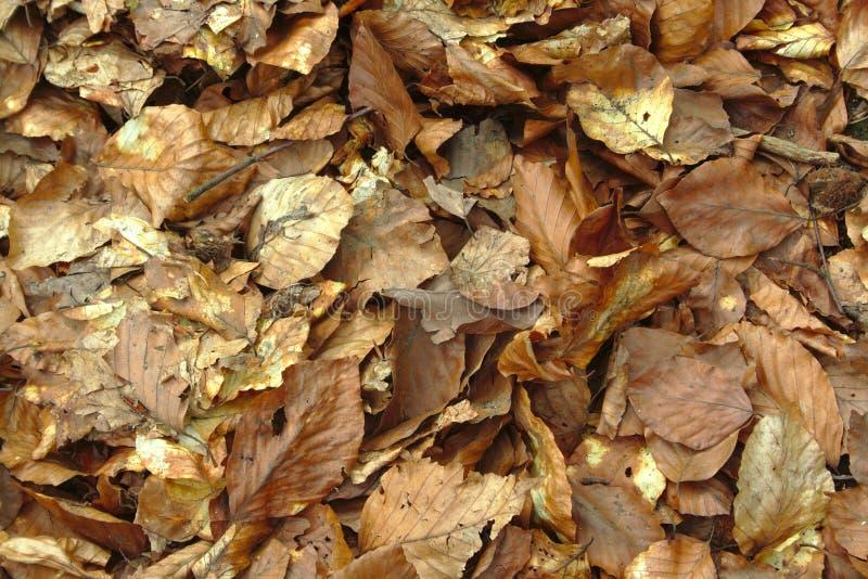 сухие листья пущи стоковая фотография