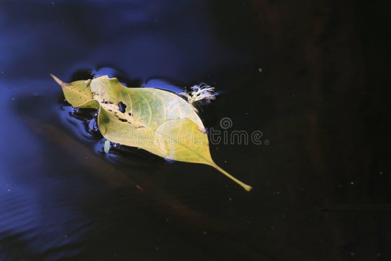 Сухие лист выходят плавать на природу поверхностной воды, зима разрешения желтая стоковое изображение