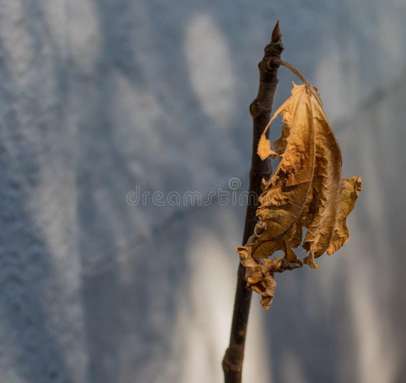 Сухие лист в зиме против серой предпосылки стоковая фотография rf