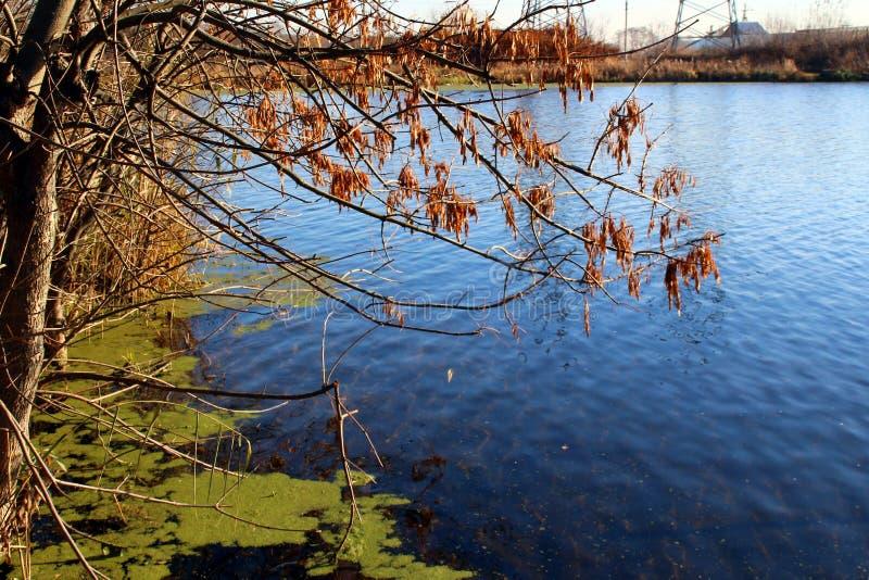 Сухие обнаженные ветви дерева над открытым морем озера стоковые изображения rf