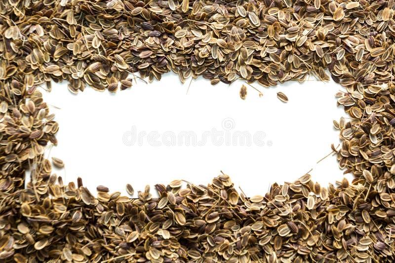 Сухие органические семена укропа, космос для текста стоковая фотография rf