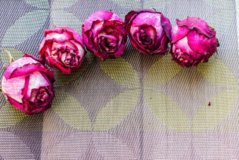 Сухие розовые цветки, розы, текстурированная предпосылка, партии женщин, сюрпризы и подарки Гербарий на памяти стоковое изображение rf