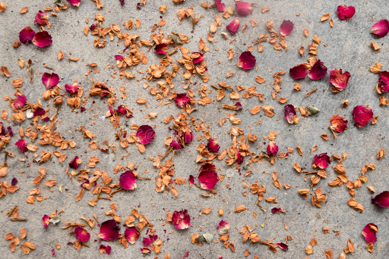 Сухие розы лепестков стоковое изображение rf
