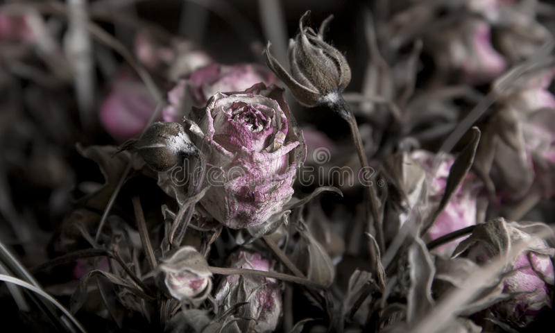 Download сухие розы стоковое изображение. изображение насчитывающей красно - 40583881