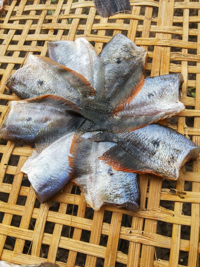 Сухие рыбы манго стоковые изображения