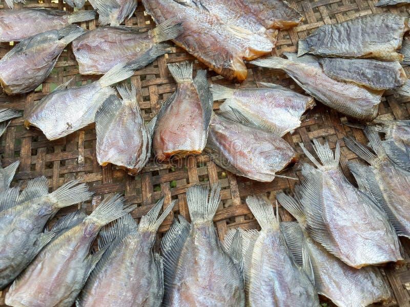 Сухие рыбы pectoralis trichopodus стоковое фото rf