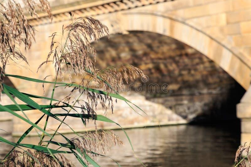 Сухие тростники с змейчатым мостом на заднем плане стоковое изображение rf