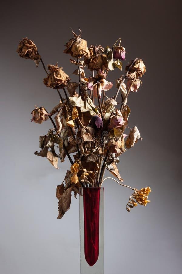 Сухие цветки в вазе стоковое фото rf