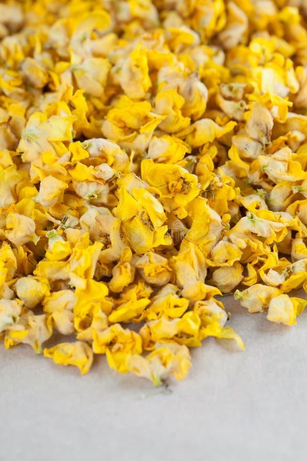 Сухие цветки mullein стоковое изображение