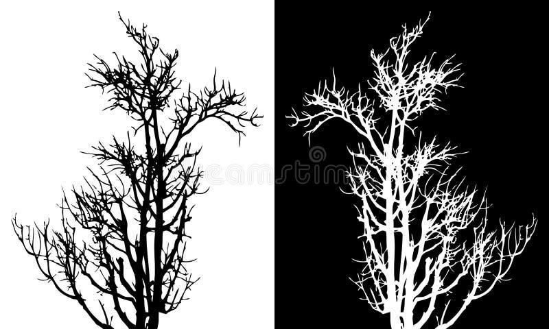 Сухим вектор изолированный деревом иллюстрация штока