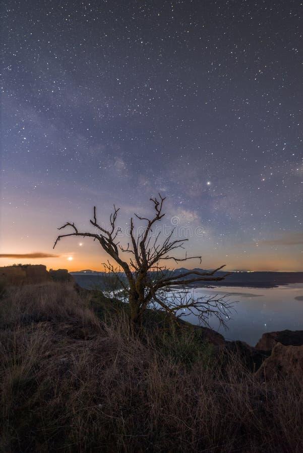 Сухое дерево в ночи стоковое изображение