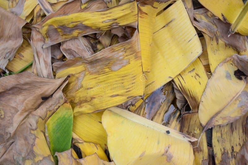Сухое желтое и коричневое разрешение банана стоковые изображения rf
