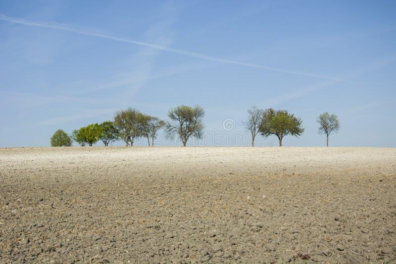 Сухое поле, деревья на горизонте и голубое небо стоковая фотография