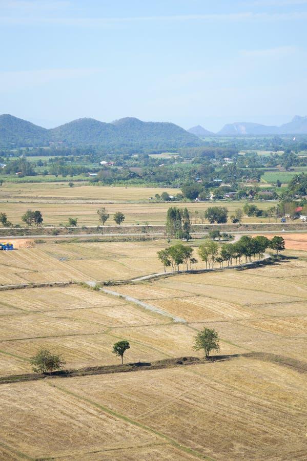 Сухое поле риса стоковые изображения rf