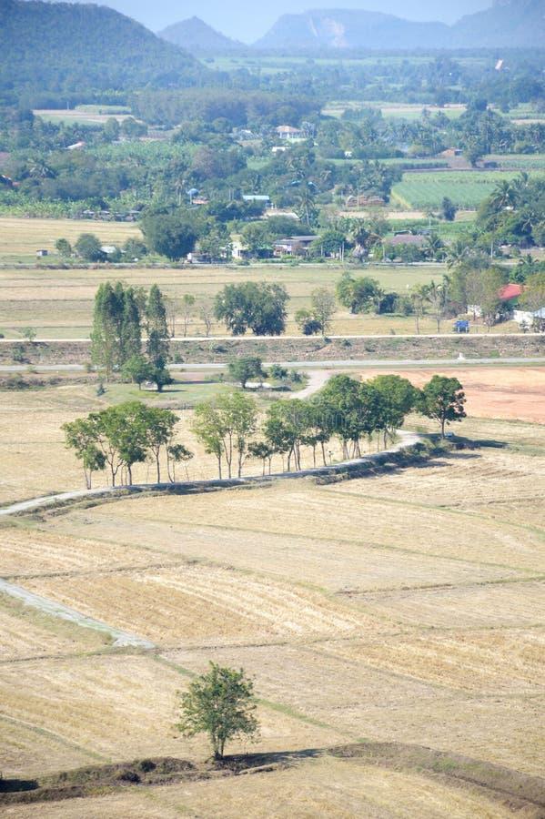 Сухое поле риса стоковое изображение