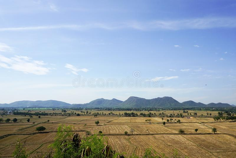 Сухое поле риса стоковое фото rf