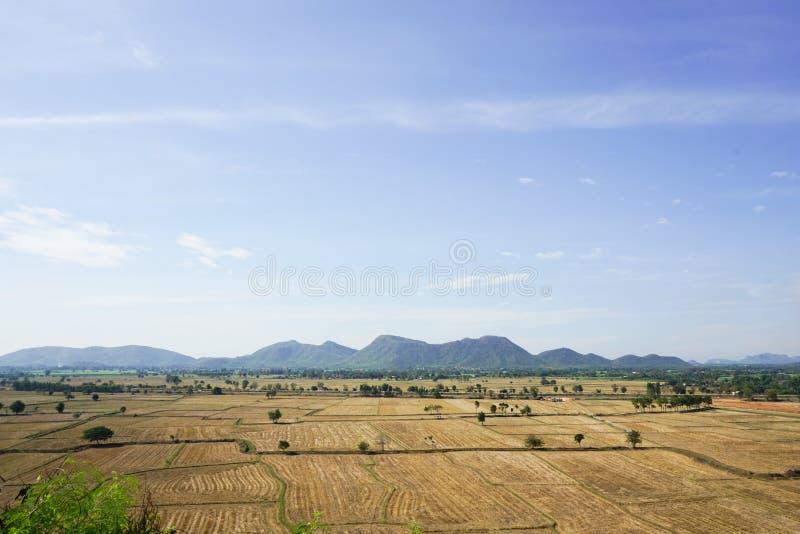 Сухое поле риса стоковые изображения