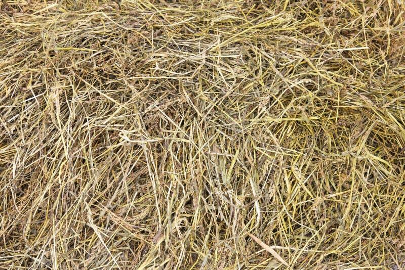 Сухое сено стоковое изображение