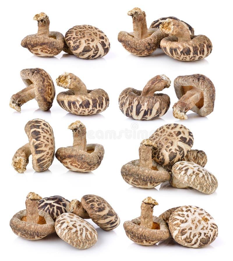 Сухой гриб шиитаке стоковые фотографии rf