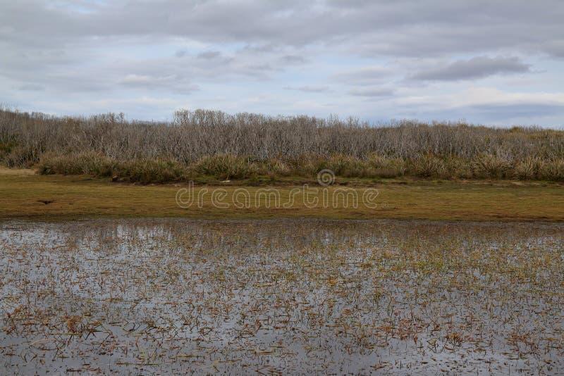 Сухой куст отражая в мелком пруде в удаленной зоне консервации Артур Pieman, удаленном западном побережье Тасмании стоковая фотография