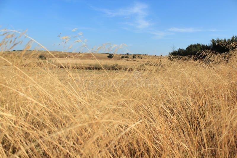 сухой ландшафт стоковое изображение