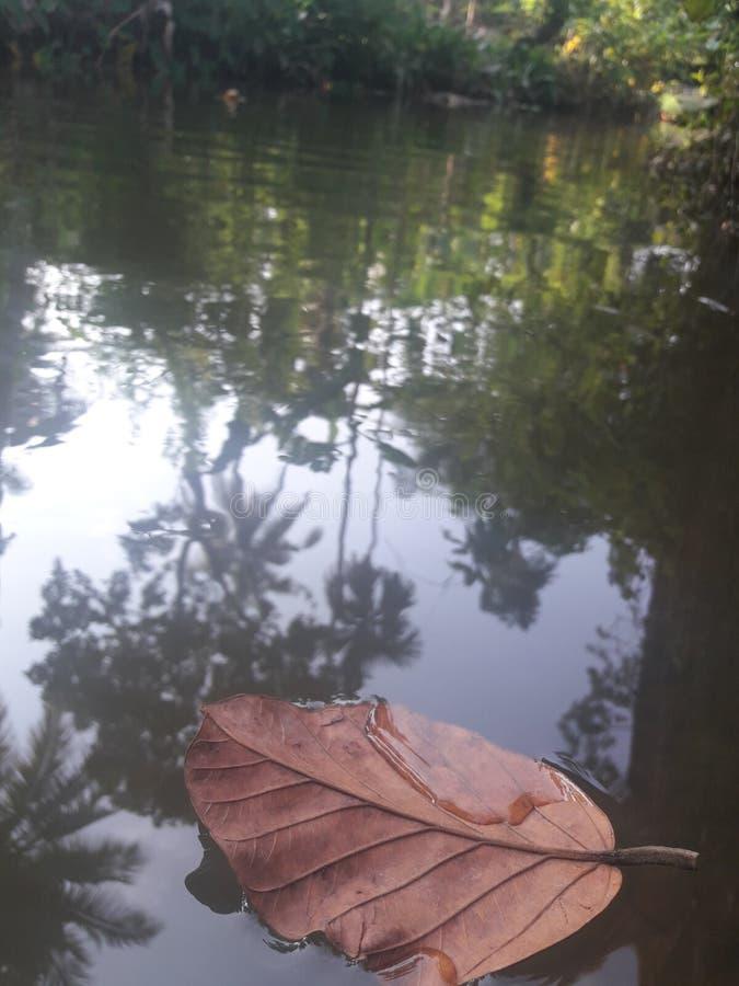 Сухой плавать лист стоковые изображения rf