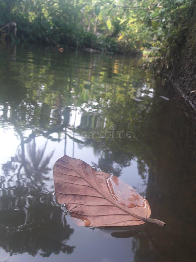 Сухой плавать лист стоковые фотографии rf