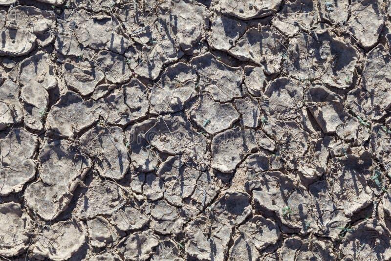 Сухой суглинок в пустыне стоковое фото