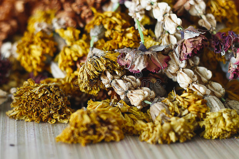 Сухой цветок гирлянды стоковое изображение