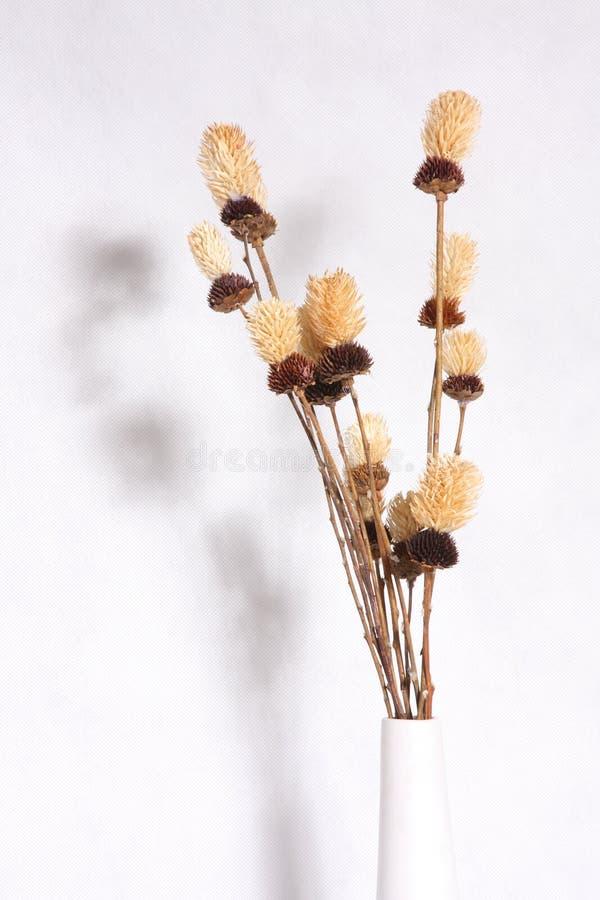 сухой цветок стоковые фото