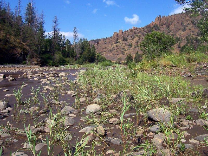 сухой riverbed стоковые фотографии rf