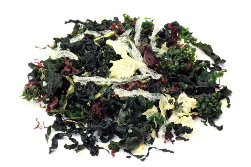 Сухой seaweed стоковое фото rf