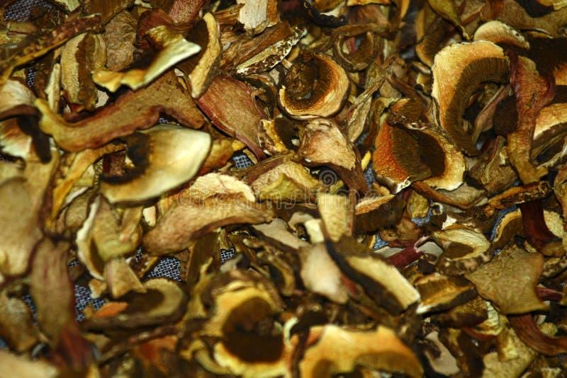 Суша грибы стоковое фото