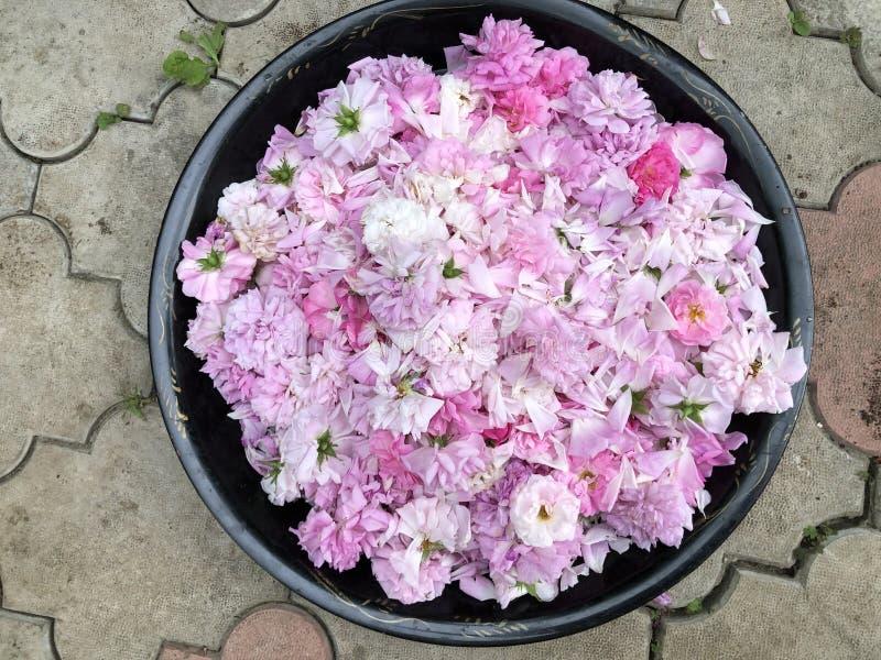 Сушить лепестки розы чая на подносе для напитка стоковое фото