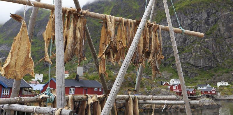 Сушить треску рыб запаса в деревне Å с традиционными красными домами и фьордом rorbu на предпосылке летом, острова Lofoten стоковое изображение rf