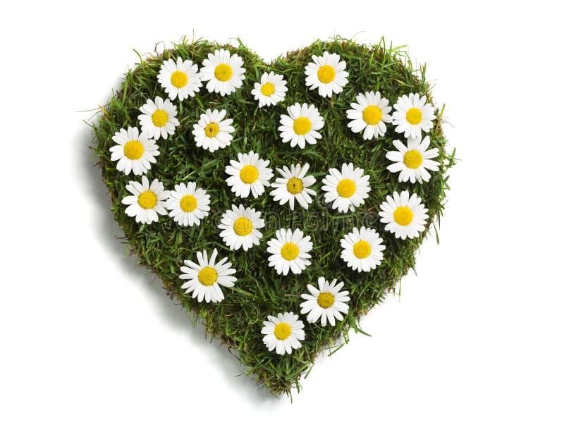 сформированная лужайка сердца маргариток стоковая фотография