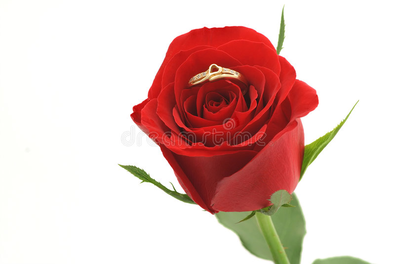 сформированная роза кольца сердца красная стоковые фото