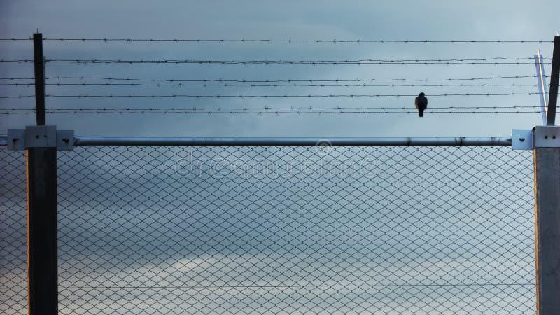 Схематическая съемка свободы сиротливой птицы сидя на загородке тюрьмы стоковое фото rf
