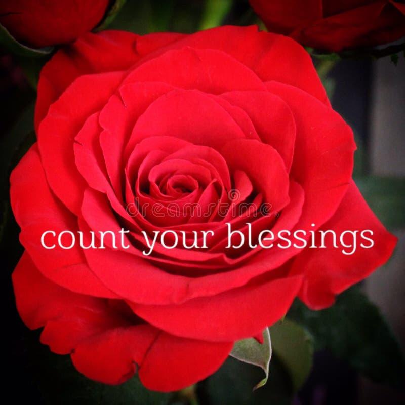 Схематический макрос красной розы стоковое фото rf